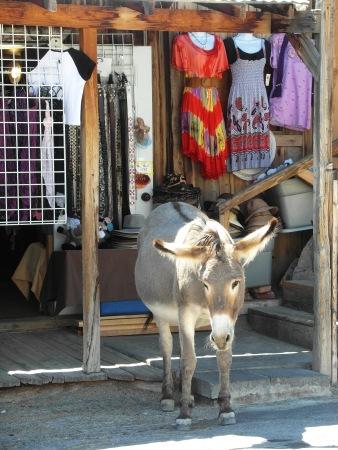 Wild mule oatman
